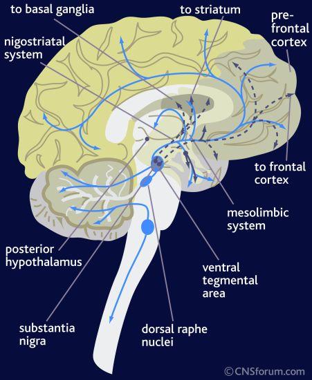 neuro path