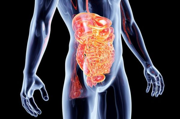 intestinal-lining-sustains-injuries.jpg (600×399)