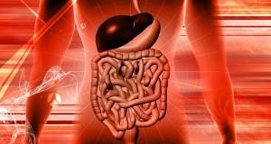 gastrointestinal track