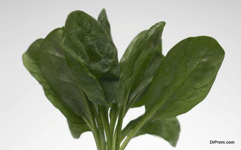 Spinach is Folic acid source
