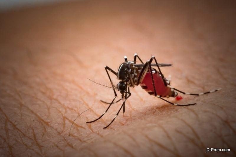 infected mosquito bite