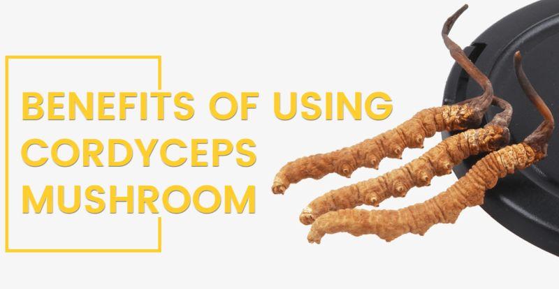 Benefits of using Cordyceps mushroom